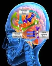 alcohol and the brain2
